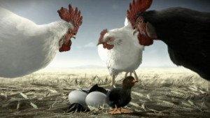FIX DARK – Chicken Sequel